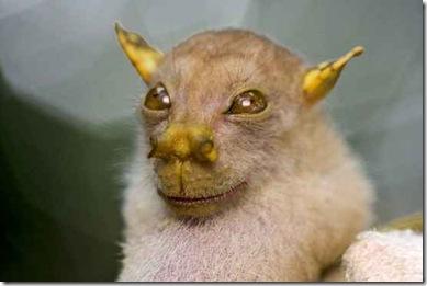 Morcego-nariz-de-tubo_1