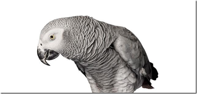 Pássaros-10