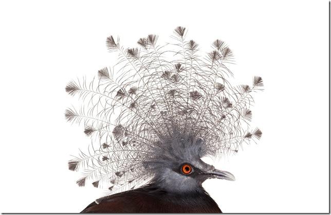 Pássaros-15