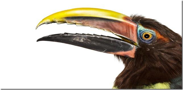 Pássaros-18