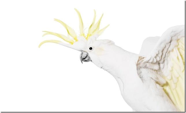 Pássaros-30