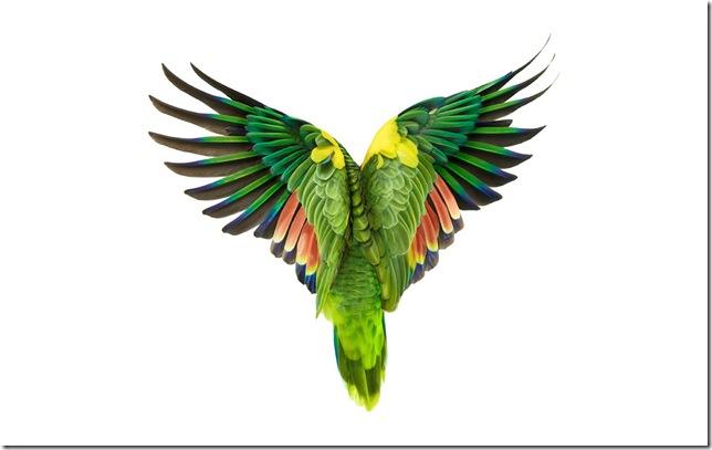 Pássaros-33