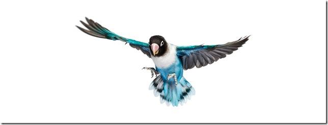 Pássaros-50
