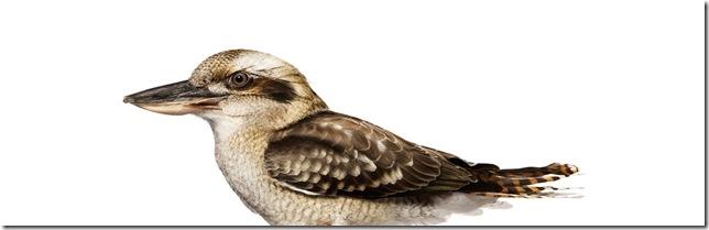 Pássaros-3
