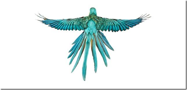 Pássaros-7