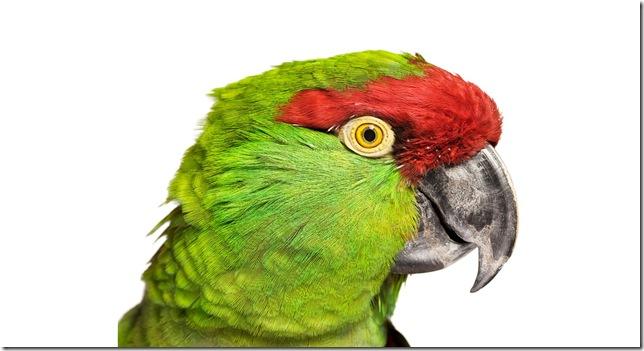 Pássaros-12