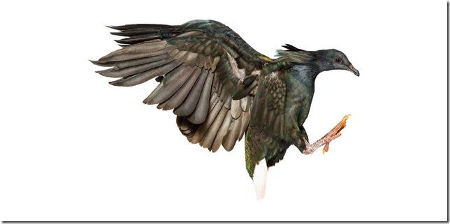 Pássaros-19