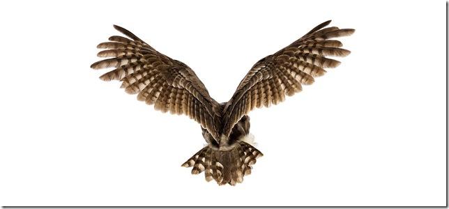 Pássaros-26