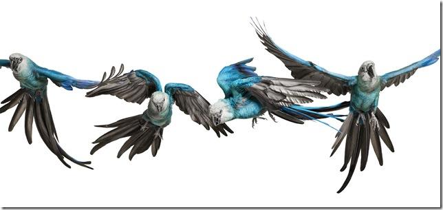Pássaros-59