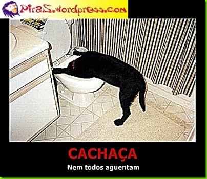 piras-cachaca