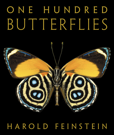 One Hundred Butterflies by Harold Feinstein – Book Review