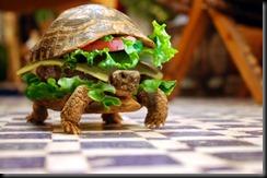 tartaruga lanche