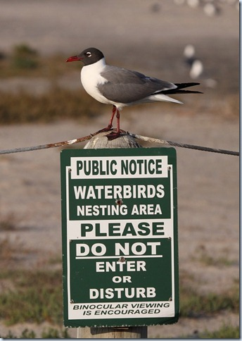 laughing_gull_colony_sign