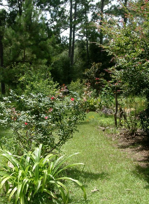 Almost august tour of the garden - The garden web forum ...