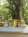 Buddha Statue and Bo Tree