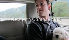 facebook perro