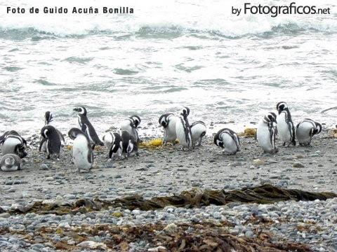 Reserva Nacional Pinguinares