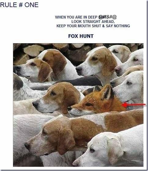 foxhunt[1]