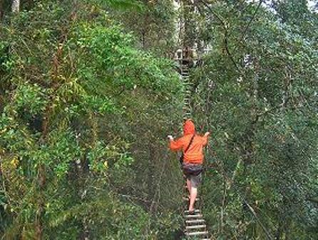 Noslek Canopy walk, Cagayan De Oro