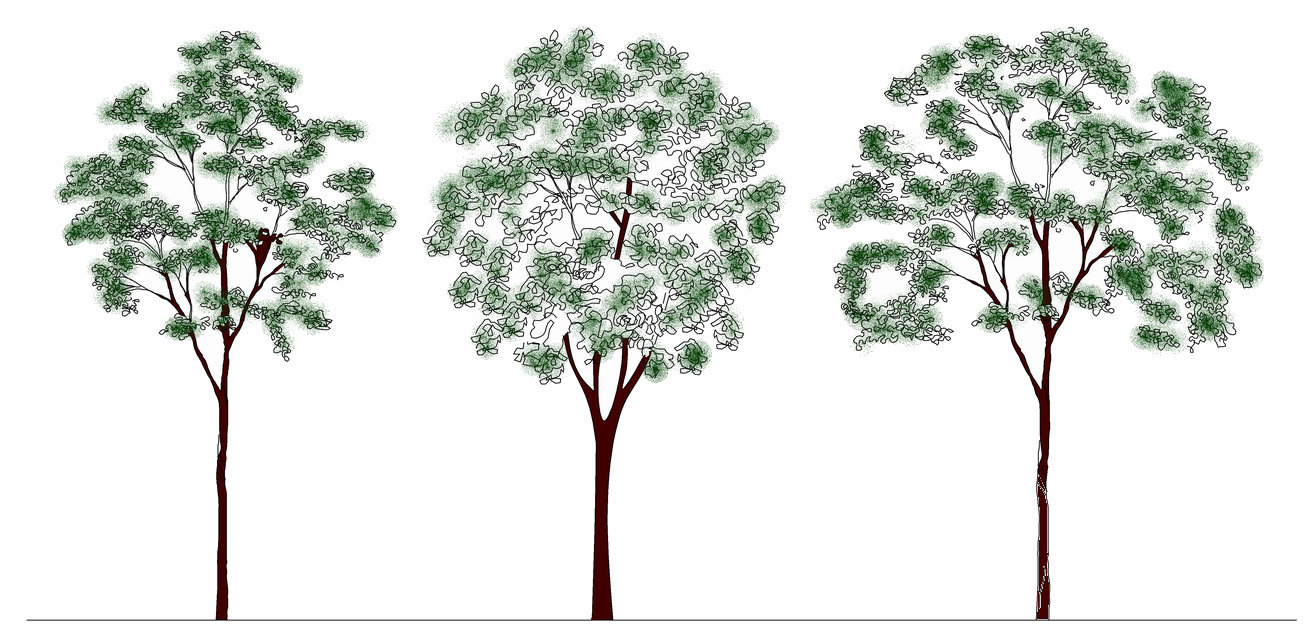 Autocad Tree Blocks 3d Cad Blocks Trees Plan