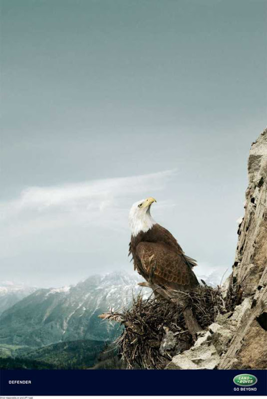 Mountain eagle