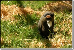 Twycross Zoo D50  01-05-2011 12-46-06