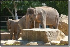Twycross Zoo D50  01-05-2011 13-35-28