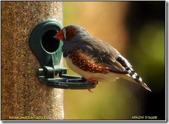 Twycross Zoo D300s X  01-05-2011 15-24-08