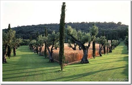 p_caruncho-olive-c_1632084c