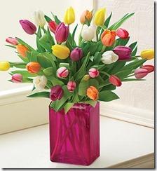 2011.05.06 - Tulips