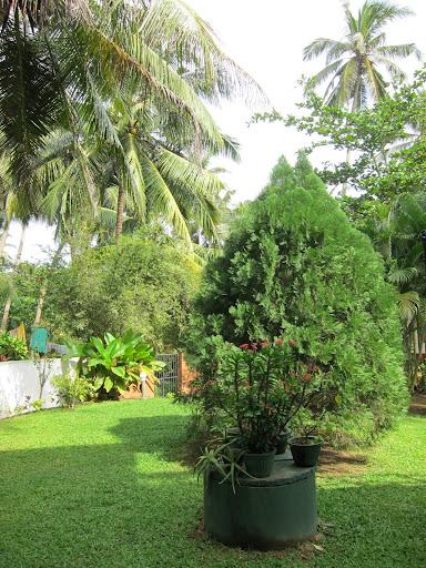 Наше двориште у Хикадуви