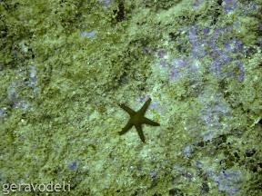 Морски свет
