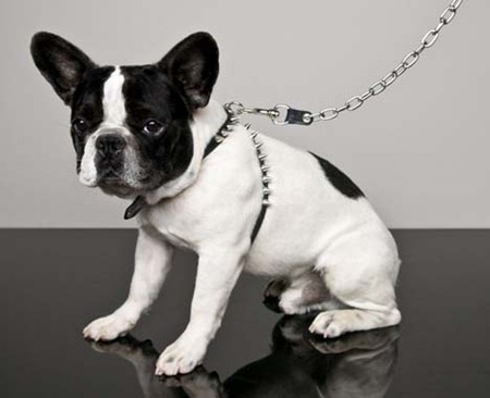 Dsquared-Dog-Capsule-Collection3