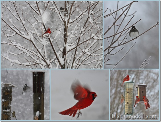 Wintry Birds2 2-10