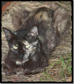 mama_cat1