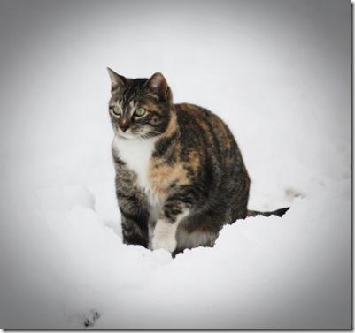 snowhazel
