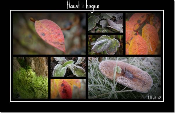 Picnik collage31