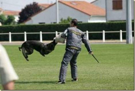 como-adiestrar-perros-de-guardia