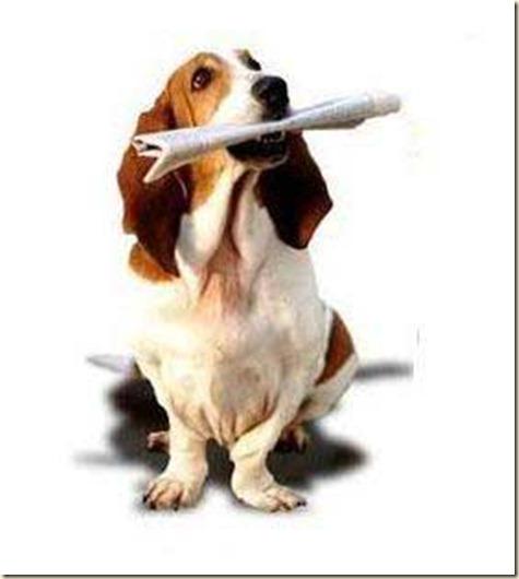 Adiestramiento de perros beagle6