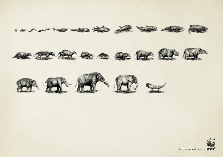 Evolución elefante