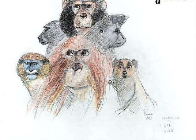 Primates diversos, 1998