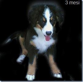 asia cucciola 1