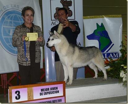 Expo_Canina184