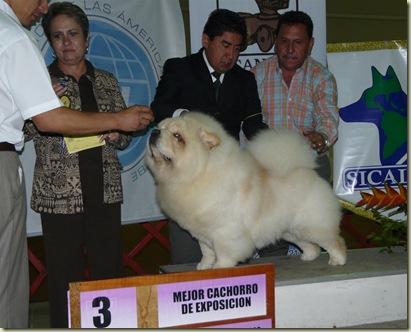 Expo_Canina163