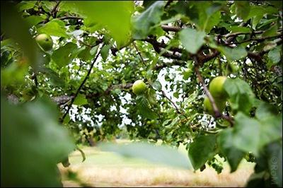 Äpple02