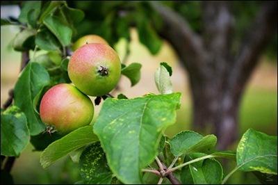 Äpple07