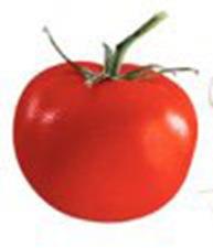 помидорчик