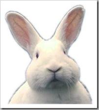 Портрет Белого Зайца