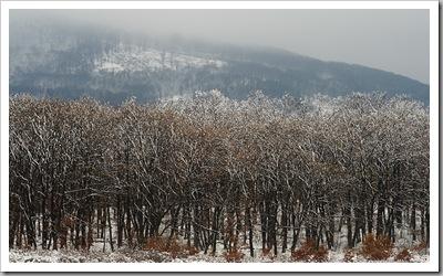 Évszakforduló - Izbég, 2010. november 27.