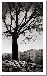 A színtelen fa - Óbuda, 2010. december 22.